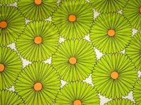 Lime_green_flower_blossom_2